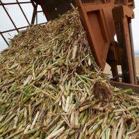 خرید و فروش ضایعات کشاورزی/ دامپروری