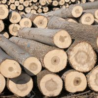 خرید انواع چوب باغی