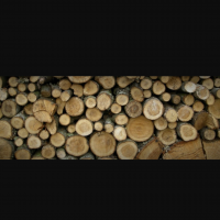 فروش چوب درخت در تناژ بالا