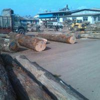 خرید چوب باغی و ضایعات و جنگلی