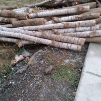 فروش چوب در بانه