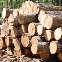 خرید چوب از باغات و ارگان های دولت