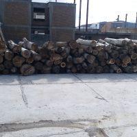 فروش چوب سنوبر و گردو تنه و ضایعات