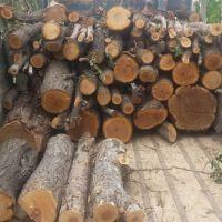 خرید چوب وقطع درخت