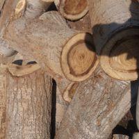 فروش چوب صنوبر قطر 25 تا 40