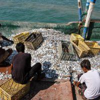 خریدار ضایعات ماهی