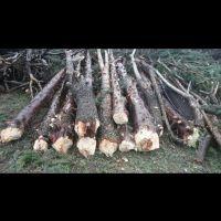 چوب سرو و گردو