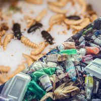 بازیافت پلاستیک با سوسک قاب بالان