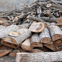 عوامل موثر بر قیمت چوب گردو کیلویی