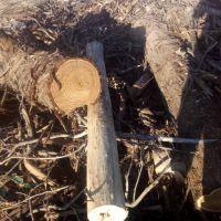 خرید چوب جنگلی و تخته برای زغال کبابی