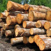 خرید انواع چوب نقد