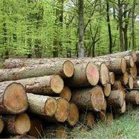 خریدار چوب از همه ایران