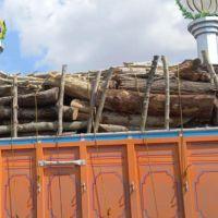 خریدار چوب (انواع درخت ) چنار ، تبریزی ، میوه ای و ...