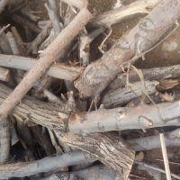 فروش چوب زغالی و تنه و گردو