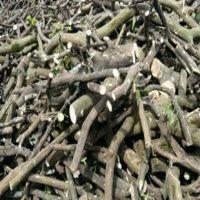 فروش چوب مرکبات در تنکابن