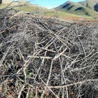 ضایعات چوب صنوبر و آلبالو