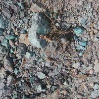 خاک مس اکسیدی عیار3.9