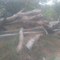 فروش  انواع چوب میوه ای وچوب درختان خیابانی و پارک