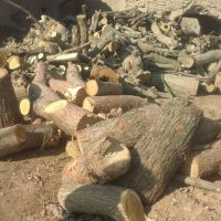 خرید چوب ضایعاتی درخت