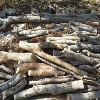 خرید چوب باغی، اکالیپتوس، مو، گردو و ...