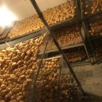 فروش ضایعات نان خشک از کارخونه