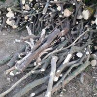 فروش چوب مرکبات شمال