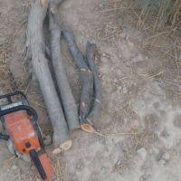 فروش چوب درخت گز