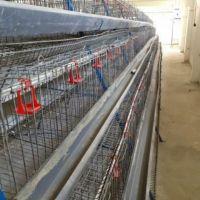 خریدار قفس مرغ تخمگذار