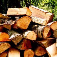 خریدار انواع چوب باغی و جنگلی