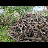 فروش چوب مرکبات شمال، چوب لیمو شمال